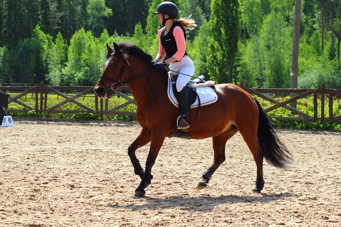 8 hyvää syytä harrastaa ratsastusta