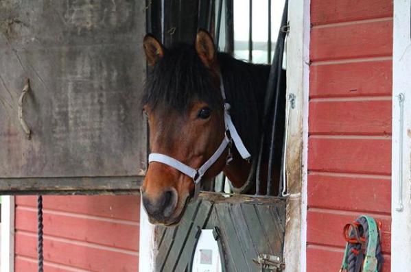 Päivä ratsastuskoulussa - Rolla