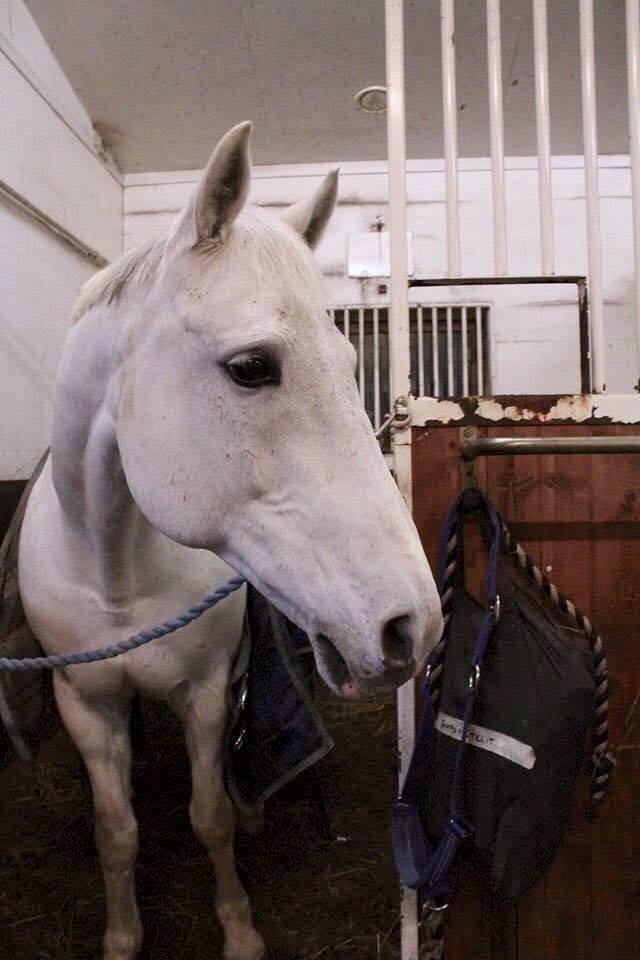 Päivä ratsastuskoulussa - Teddy